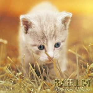 relaxing music download mp3. cat music