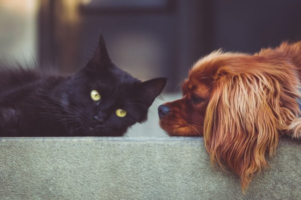 relaxing music for dogs. calming music for cats. free mp3 downloads.
